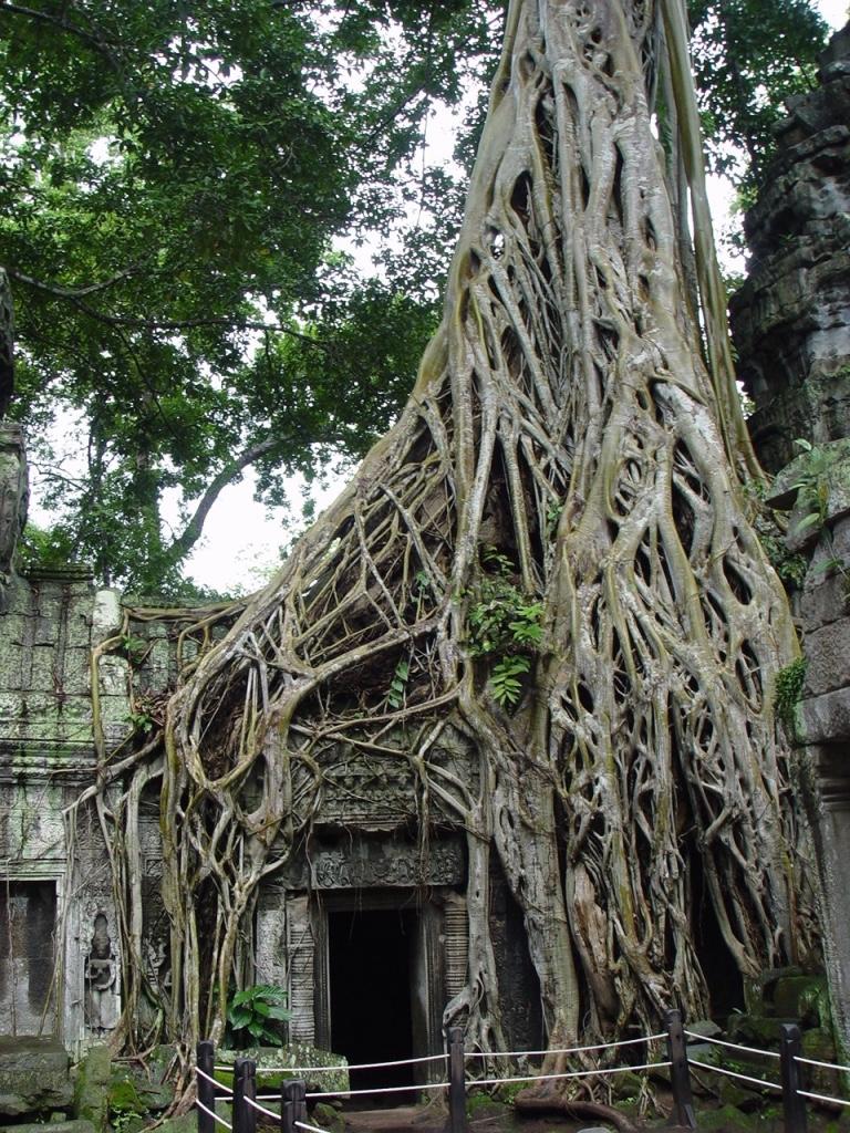 thumb_Cambodge été 2012 113_1024.jpg